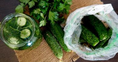 Малосольные огурцы с чесноком и зеленью быстрого приготовления — 6 классических рецептов